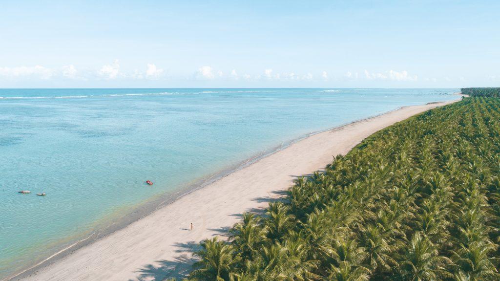 foto aérea de uma praia com o mar verde e um vasto coqueiral